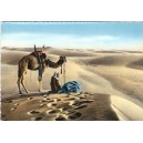 EGYPTE : Prayer in the desert - Chameau